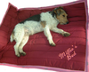 Bestickung Name PolyPads® Outsider©/Insider©/TowelBed© Pet Bed